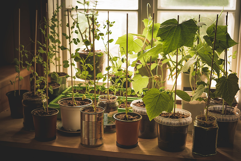 Vegetables You Can Grow In Pots